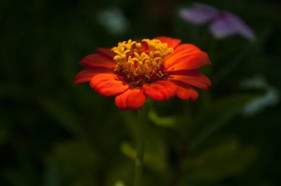 ricoflorflor