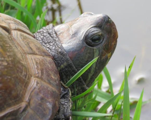 adrianatartaruga
