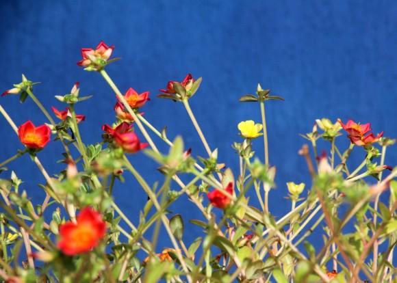 zbflorespraia