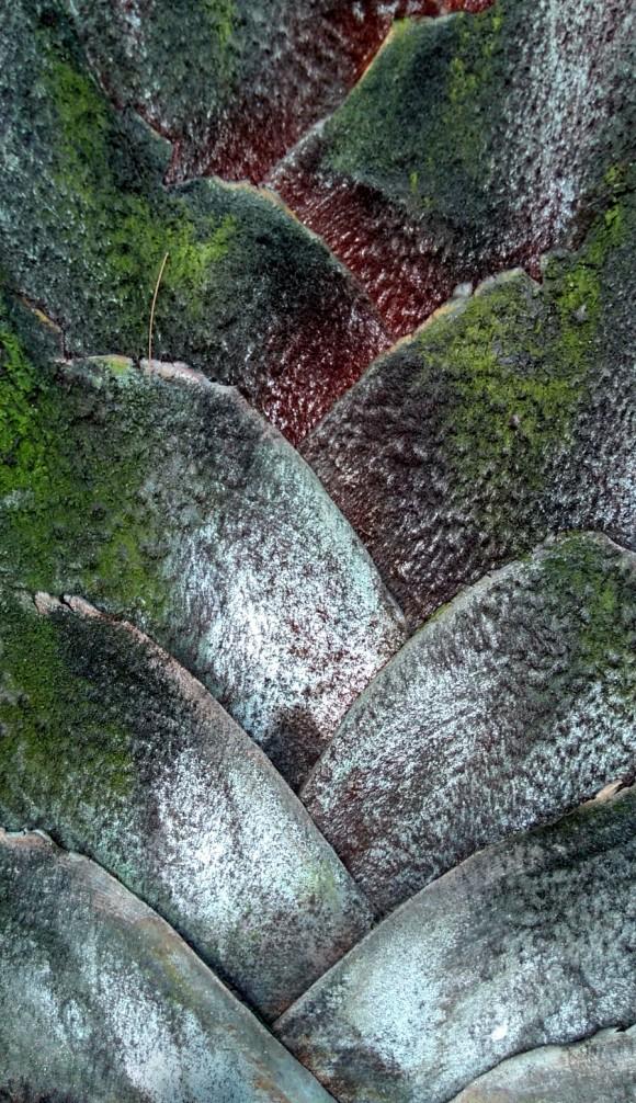 zbcascasárvore