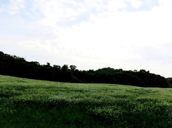 zbmarverde