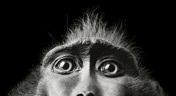 animal-portrait-tim-flach-06