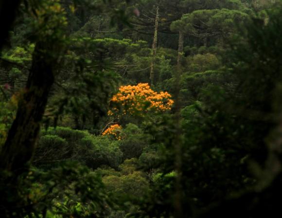 zbamarelonoverde